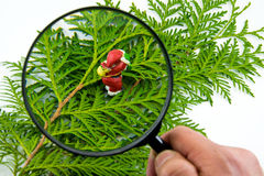 Figurine of Santa Claus stands on the thuja Leaves. Through magnifying glass on white background Royalty Free Stock Photo