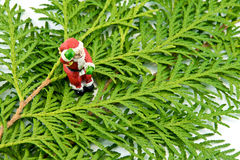 Figurine of Santa Claus stands on the thuja Leaves. On white background Royalty Free Stock Photo