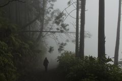 Figurine walks to others in the misty path who have past the fallen tree at the Sete Cidades Caldera`s wall.
