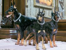 Figurines du dobermann trois Photographie stock