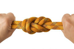 Figuur acht knoop in dubbele kabel met twee vuisten stock afbeeldingen
