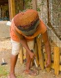 Fijación de una pluma del perro en el Caribe fotografía de archivo