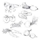 Fije, colección de verduras dibujadas diversa mano libre illustration