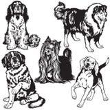 Fije con blanco del negro de los perros Imagen de archivo libre de regalías