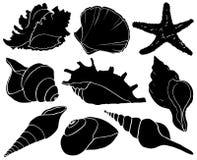 Fije con las conchas marinas y las siluetas de las estrellas de mar, colección del molusco del mar Foto de archivo libre de regalías