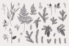 Fije con las plantas del invierno stock de ilustración