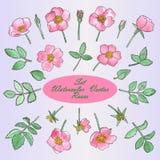 Fije con las rosas y las hojas dibujadas mano de la acuarela Imágenes de archivo libres de regalías