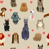 Fije con los perros criados en línea pura Fotos de archivo libres de regalías