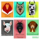 Fije con los perros criados en línea pura Imagen de archivo