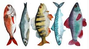 Fije con los pescados stock de ilustración