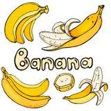 Fije con los plátanos amarillos brillantes Ejemplo colorido del vector en estilo del bosquejo Foto de archivo