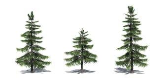 Fije de árboles de cedro de Alaska con la sombra en el piso ilustración del vector