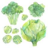 Fije de bosquejo de la acuarela con las verduras verdes frescas stock de ilustración