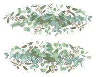 Fije de casarse ramos largos Floral elegante, verdor, colección Ramo de espiral del eucalipto, populus, robusta Todos los element ilustración del vector