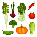 Fije de diversas verduras maduras Productos agrícolas orgánicos Alimento natural Ingredientes frescos para el plato vegetariano c stock de ilustración