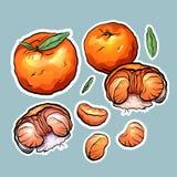 Fije de etiquetas engomadas de la historieta del color de la mandarina El objeto está a parte del fondo stock de ilustración