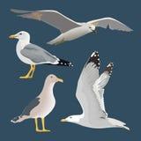 Fije de 4 gaviotas Asomando, elevación, colocando, con las alas dobladas, la reclinación, curiosa El volar maúlla cuello largo, p ilustración del vector