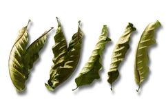 Fije de hojas secas en aislado foto de archivo