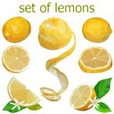 Fije de imágenes de limones con las hojas y las flores bajo polivinílicas ilustración del vector