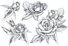 Fije de la mano dibujada subió las flores y las hojas aisladas en el fondo blanco fotos de archivo