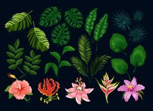 Fije de las guirnaldas lindas de la lavanda Diseño floral del estilo de Provence Flores de la lavanda del vector aisladas en el f stock de ilustración