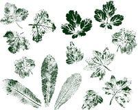 Fije de las impresiones de la hoja aisladas en el fondo blanco Tinta de sello verde Vector ilustración del vector