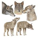 Fije de lobos grises del vector stock de ilustración