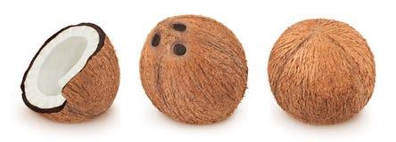 Fije de los cocos aislados en un blanco imagen de archivo libre de regalías