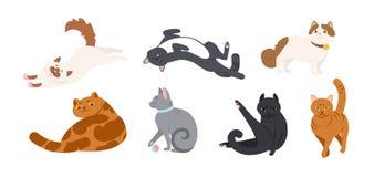 Fije de los gatos adorables de las diversas razas que mienten, el sentarse, estirándose, jugando con la bola Paquete de purasangr libre illustration