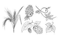 Fije de los ingredientes de la elaboración de la cerveza imágenes de archivo libres de regalías