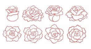 Fije de rosas del esquema florece aislado imágenes de archivo libres de regalías