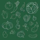 Fije de verduras exhaustas de la diversa mano Bosquejos de diversas comidas stock de ilustración