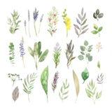 Fije de wildflowers y de hierbas de las hojas de la acuarela ilustración del vector