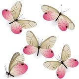 Fije del aurorina realista rosado de Cithaerias de las mariposas Elemento del dise?o aislado en el fondo blanco Gr?ficos de vecto libre illustration