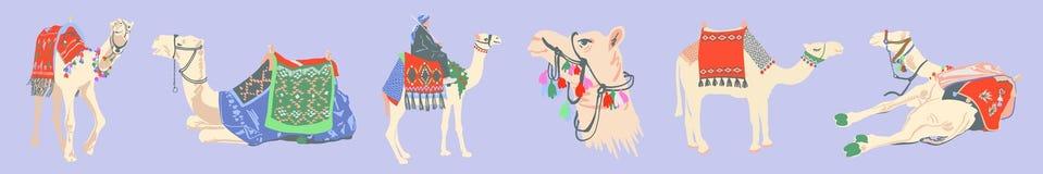 Fije del camello egipcio adornado con las alfombras brillantes stock de ilustración
