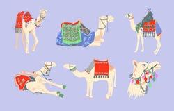 Fije del camello egipcio adornado con las alfombras y los ornamentos brillantes stock de ilustración