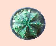 Fije el cactus de neón Stillife creativo mínimo, fotografía de archivo