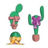 Fije el cactus en las bufandas Fotografía de archivo libre de regalías