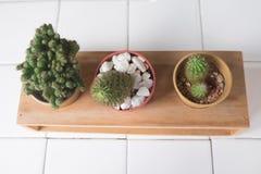 Fije el cactus, plantas suculentas en pote Foto de archivo