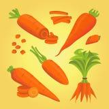 Fije el ejemplo del vector de la zanahoria Imagen de archivo