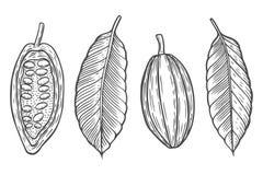 Fije el ejemplo del vector de los granos de cacao stock de ilustración