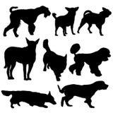 Fije el perro negro de la silueta en un fondo blanco Imagen de archivo