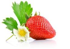 Fije la baya de la fresa con el corte y la hoja verde Fotografía de archivo libre de regalías