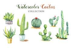 Fije la colección de la acuarela de la pintura de la mano del cactus
