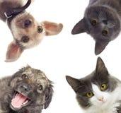 Fije la observación de los animales domésticos Fotos de archivo