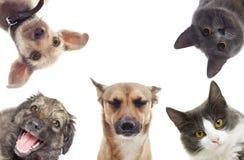 Fije la observación de los animales domésticos Fotos de archivo libres de regalías