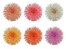Fije las flores Imagen de archivo libre de regalías