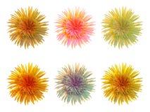 Fije las flores Fotografía de archivo libre de regalías