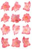 Fije las flores aisladas Foto de archivo