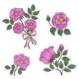 Fije las flores subió Foto de archivo libre de regalías